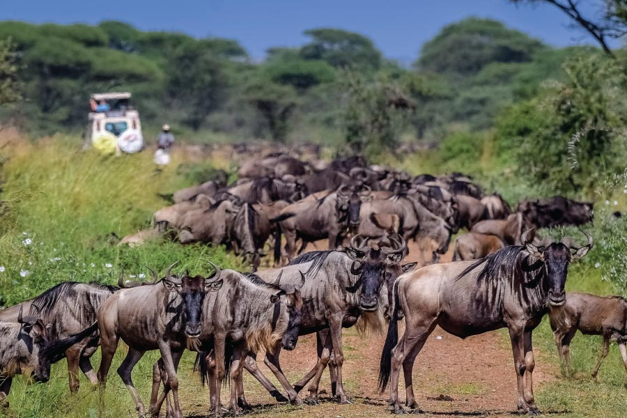 Serengeti National Park Wildebeest Great Migration
