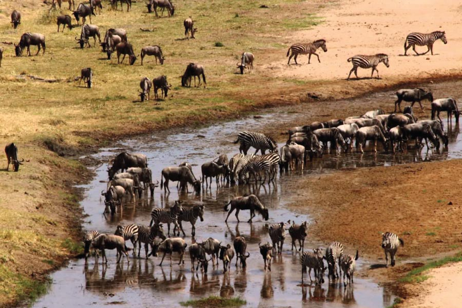 tarangire national park - 3 Days safari Tarangire, Lake Manyara and Ngorongoro crater