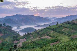 Uganda Rwanda Adventure Safari - Bwindi Silverback Gorilla
