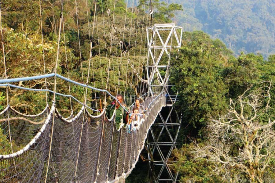 3 Days Nyungwe Forest Chimpanzees Tour