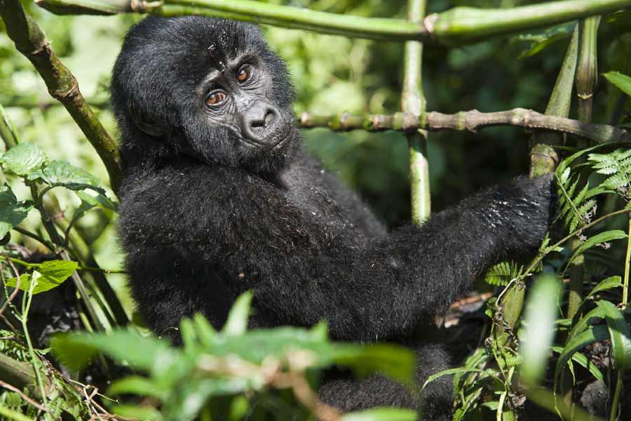 Rwanda Uganda Kenya Tanzania Safari