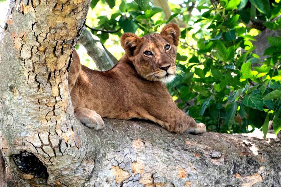 Uganda Safari