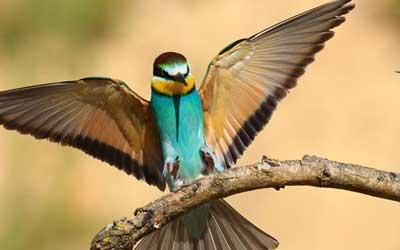 Rwanda Birding Tours