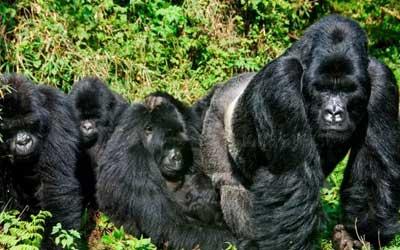 Midrange Rwanda Safari