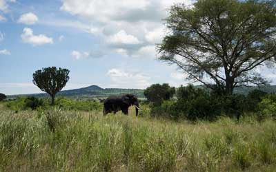 Midrange Uganda Safaris
