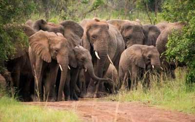 Rwanda Safari Parks And City Tours