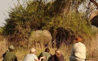Rwanda Walking Safari