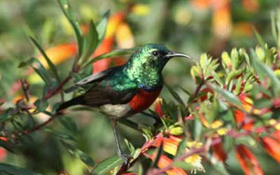 Birding In Rwanda