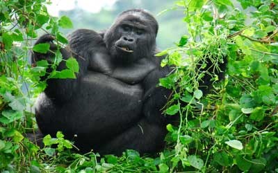Things To See In Uganda