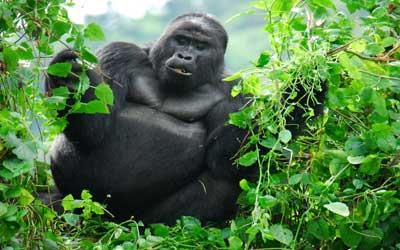 Things To See In Uganda